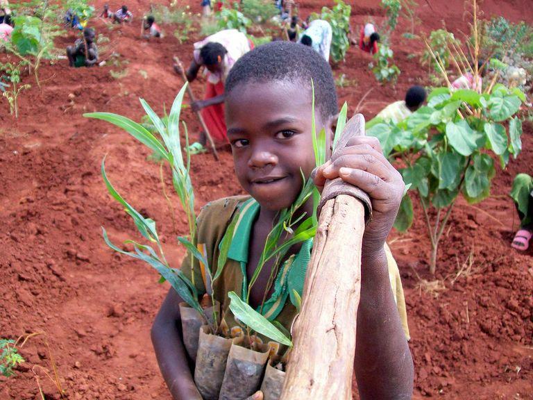 Etiopía planta 350 millones de árboles en un día, bate récord mundial