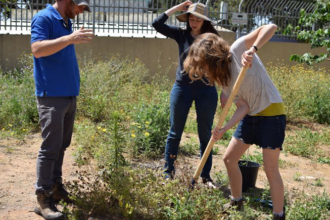 A person digs in an Israeli food forest