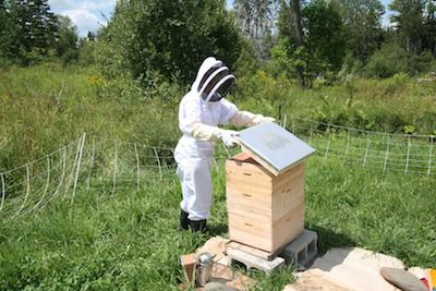 Beekeeper opening the outer cover for a hive inspection