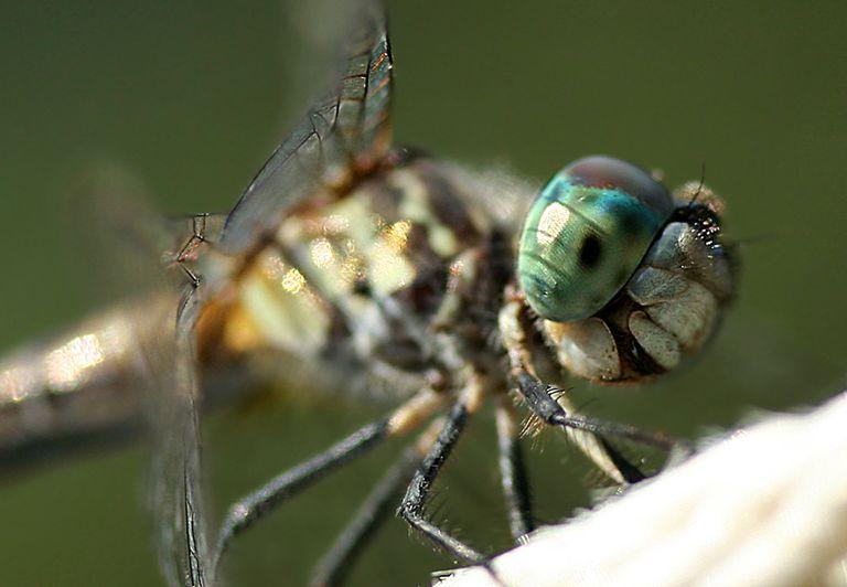 Close up of a bug