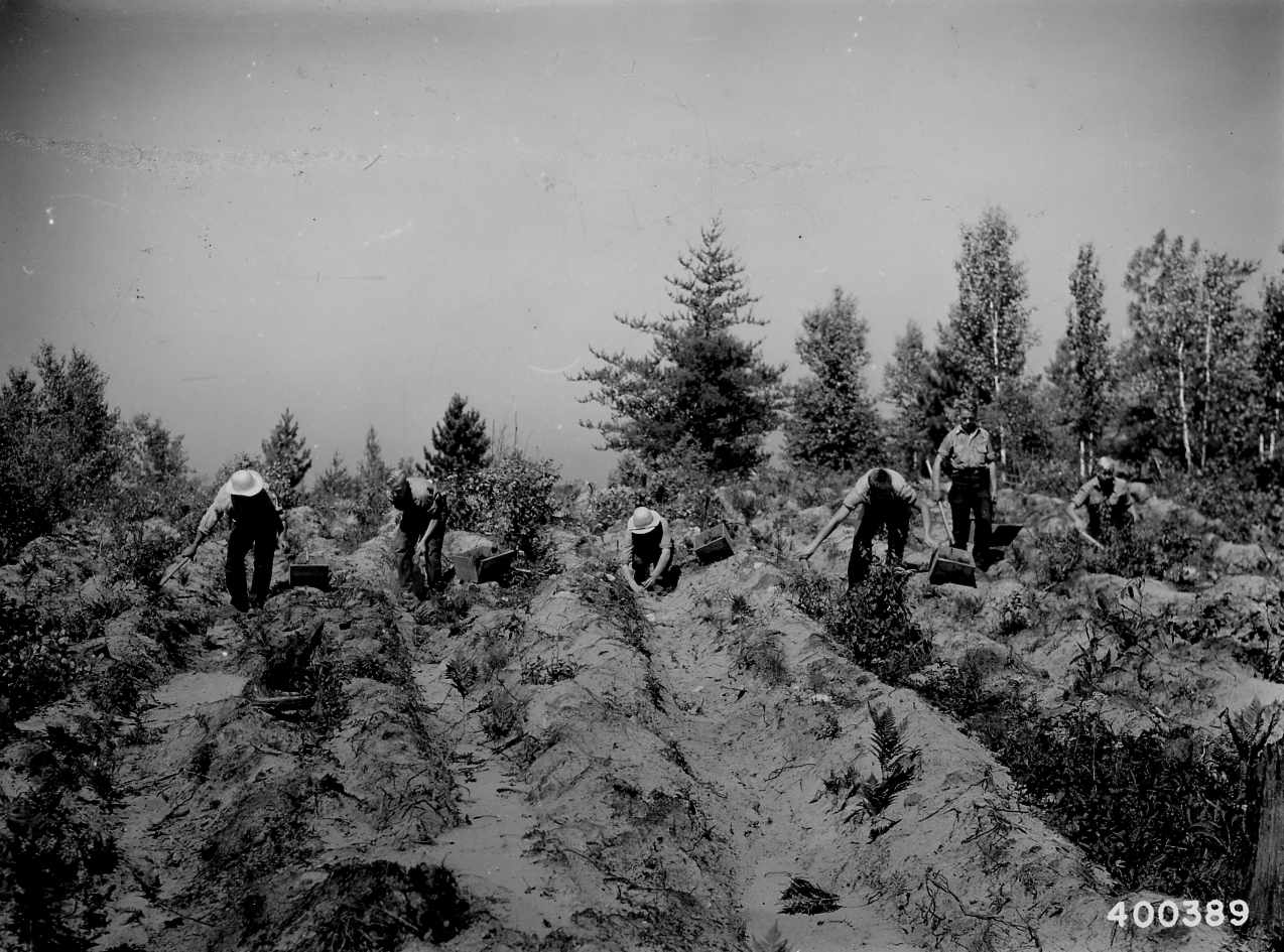 Civilian Conservation Corps (CCC) Enrollee Crew Planting