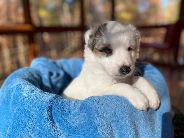 Treehugger-foster-puppy-Bernard