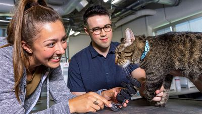 Olive the cat is fitted with a prosthetic