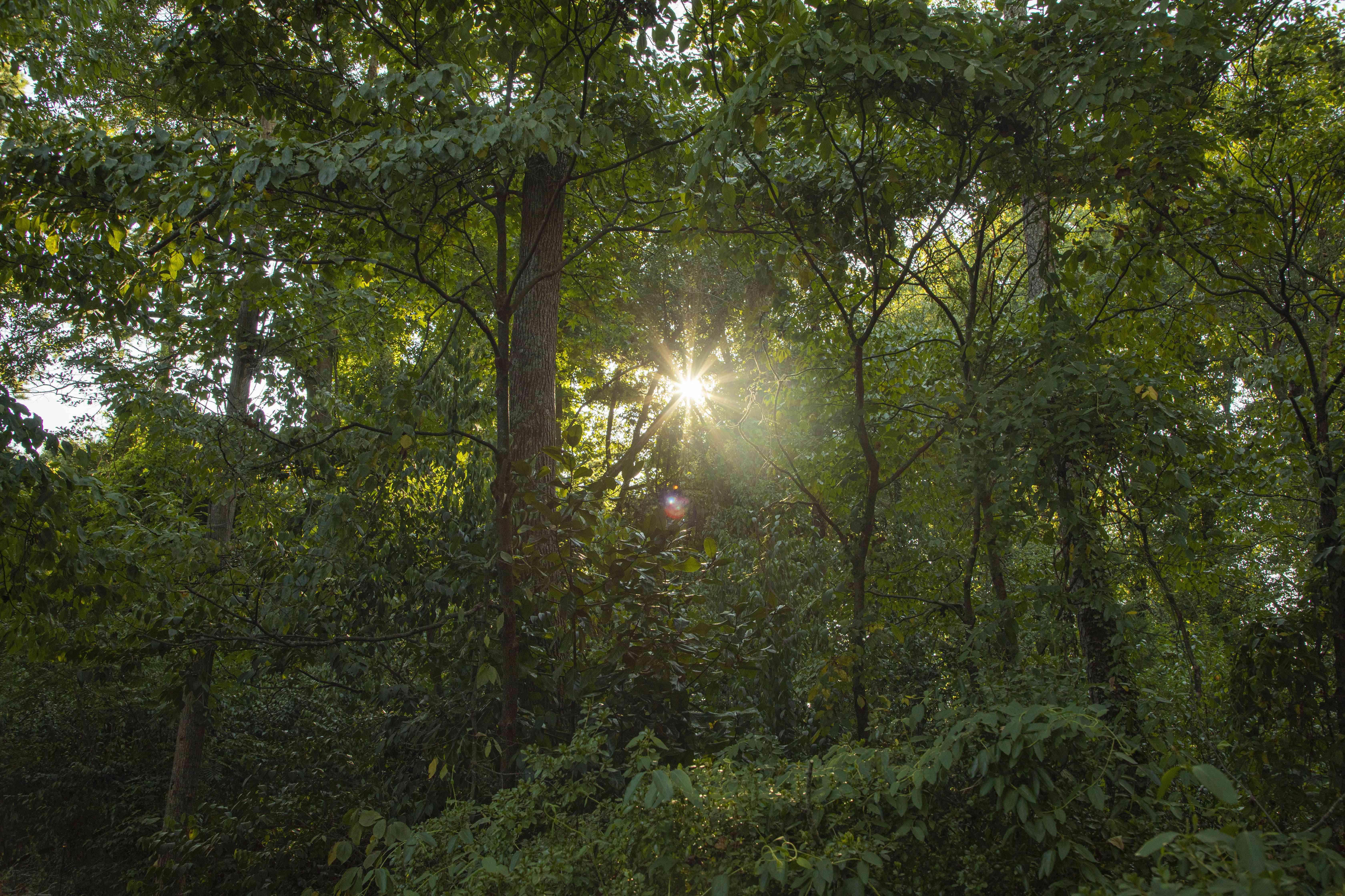 sun breaks through trees overgrowth