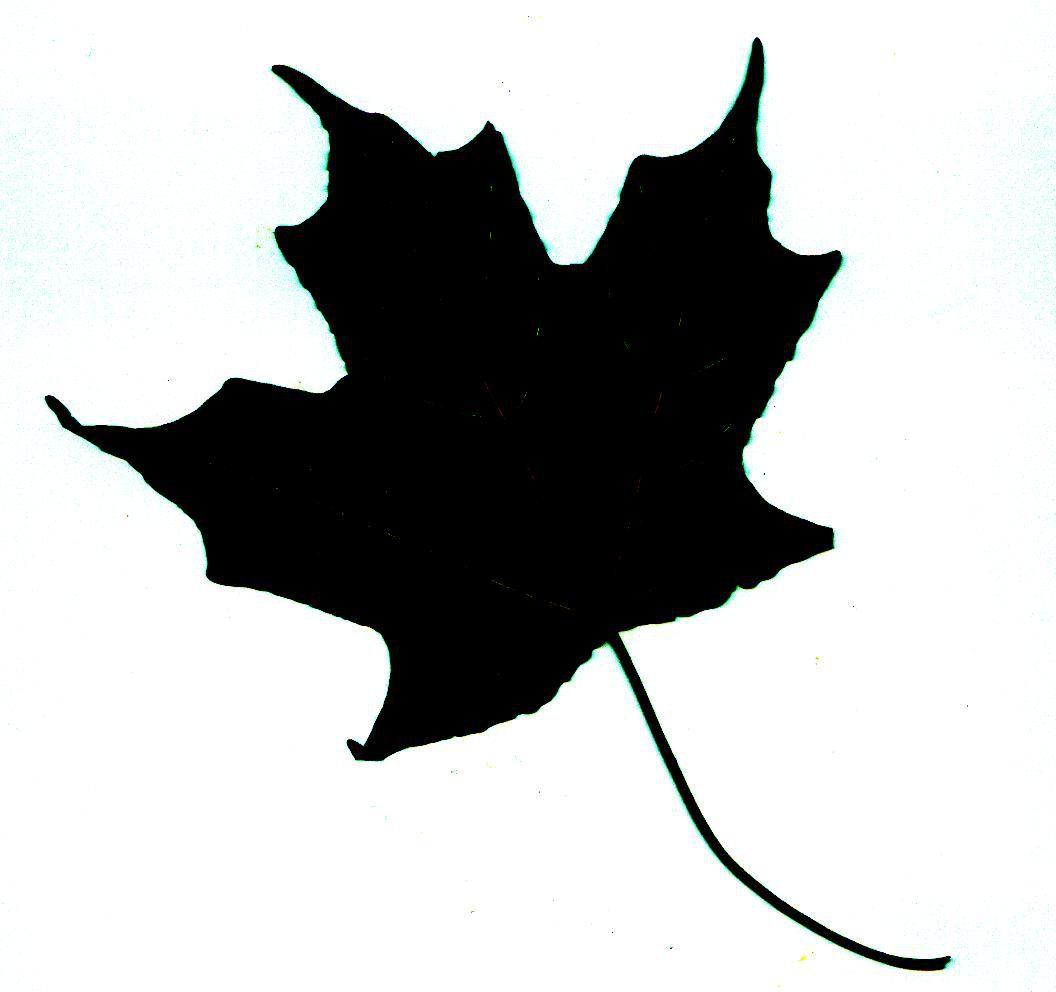 Silhouettes Maple Leaf