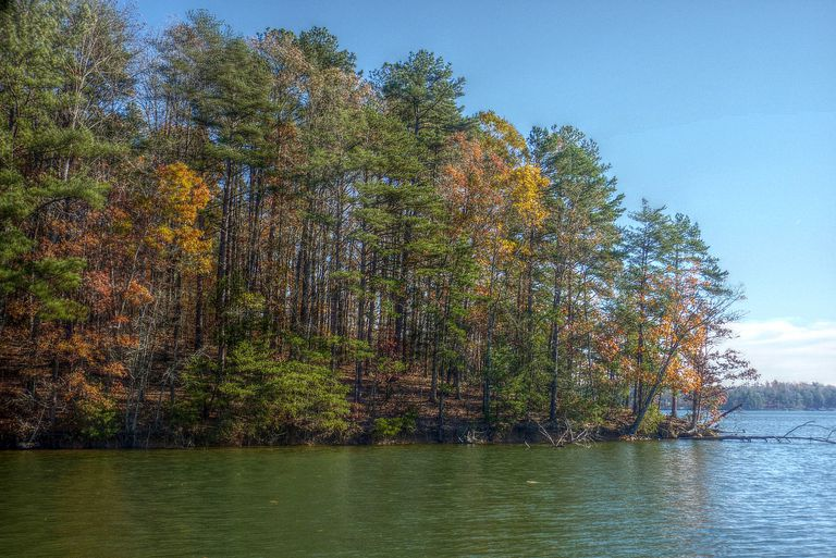 Trees changing colors next to lake