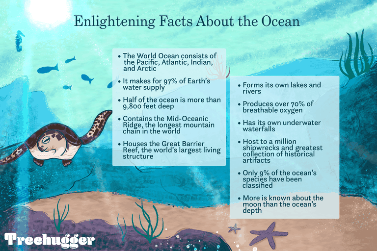 Enlightening facts about the ocean