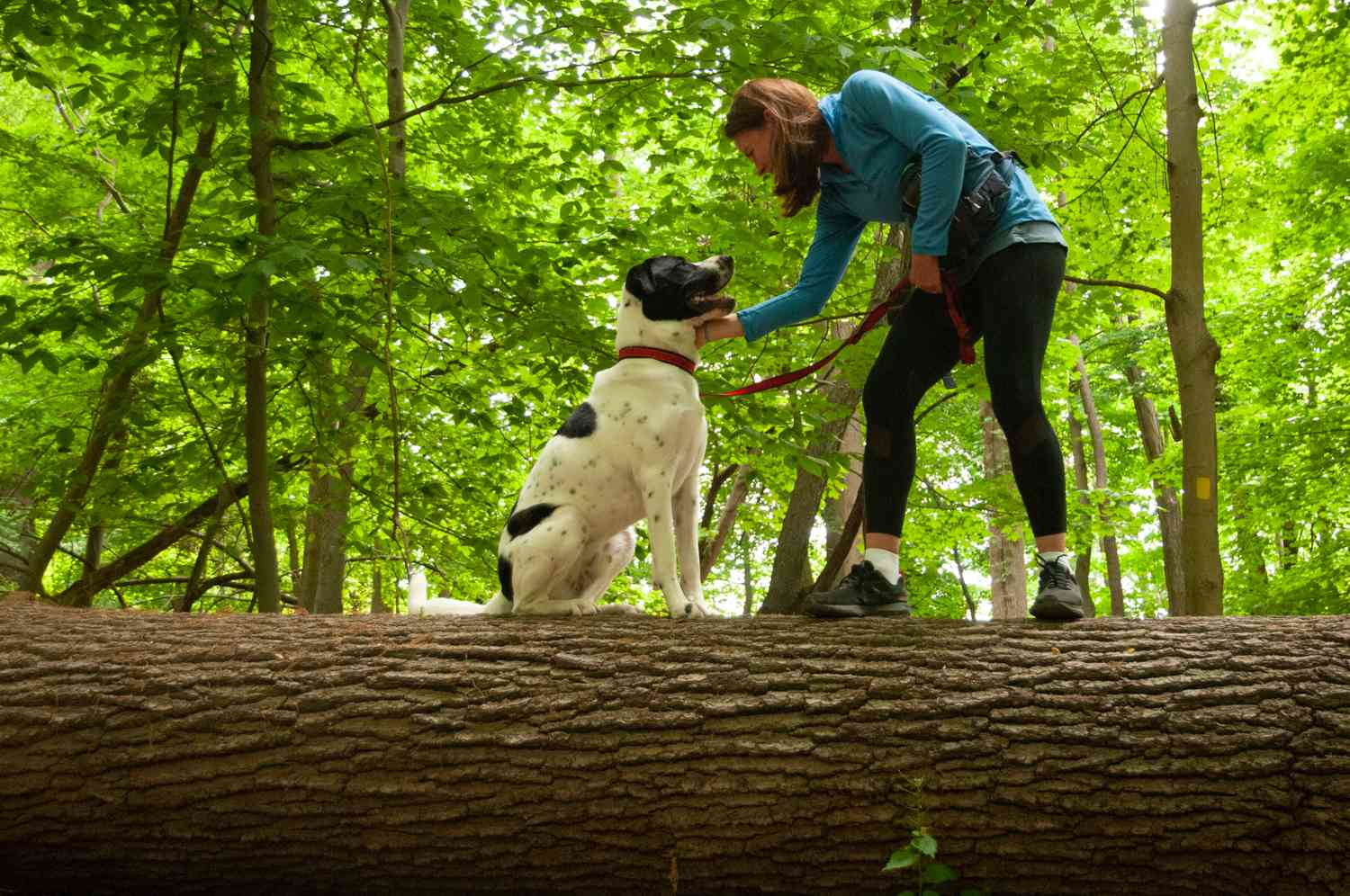 woman with black and white dog balance on large fallen tree in woods
