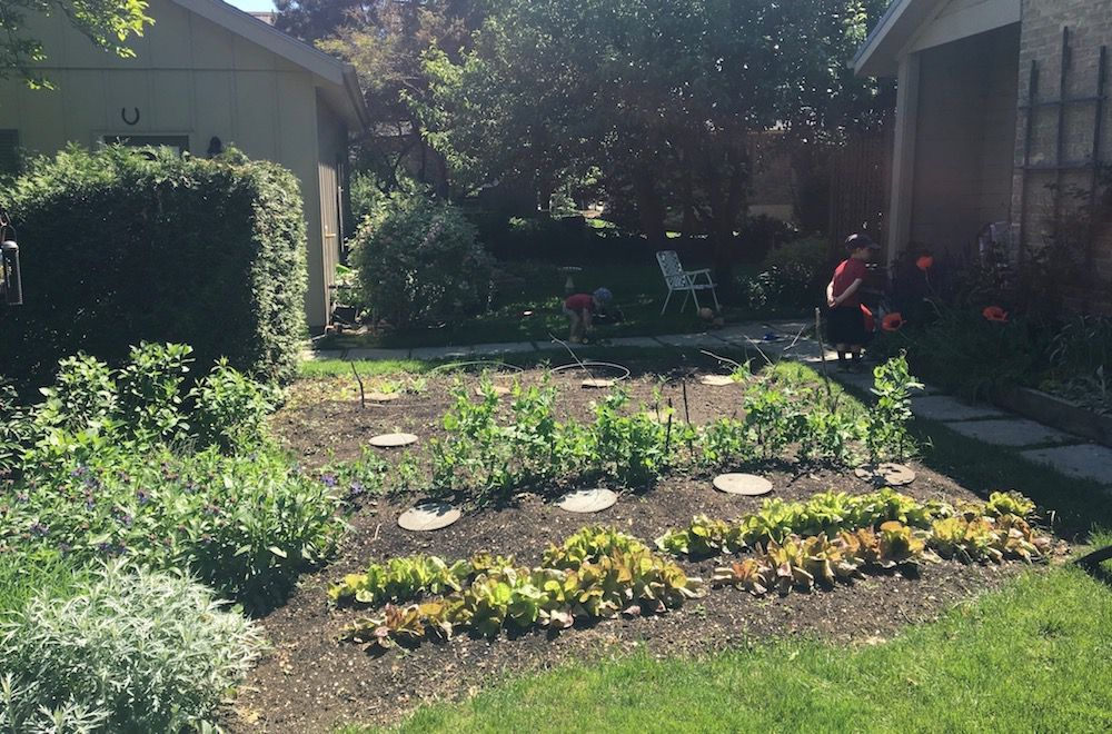 Who Knew a Vegetable Garden Could Be So Fun?