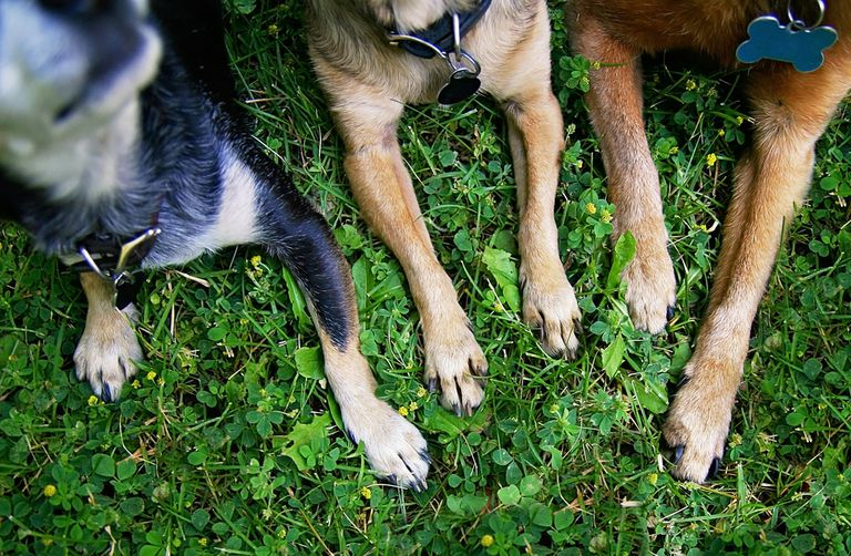 dogs with paws in the grass