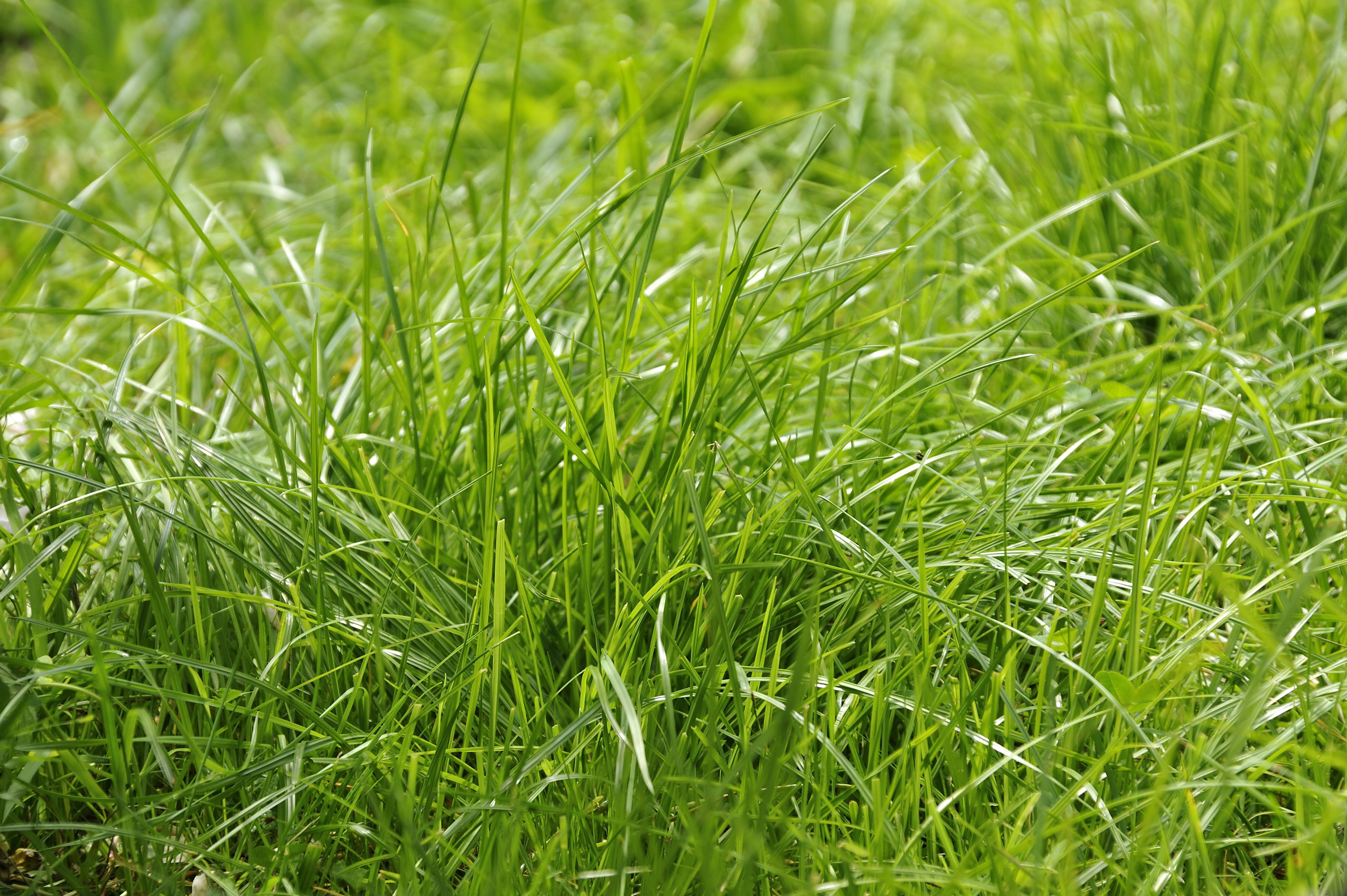 foto hard grasse