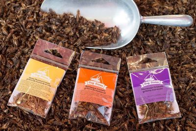 Edible insects with a metal scoop and three plastic packages