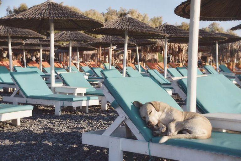 Fotógrafo captura la vida secreta de un perro callejero en el paraíso