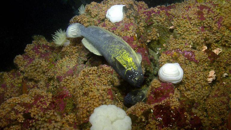 Investigadores descubren un fascinante mundo submarino repleto de nueva vida