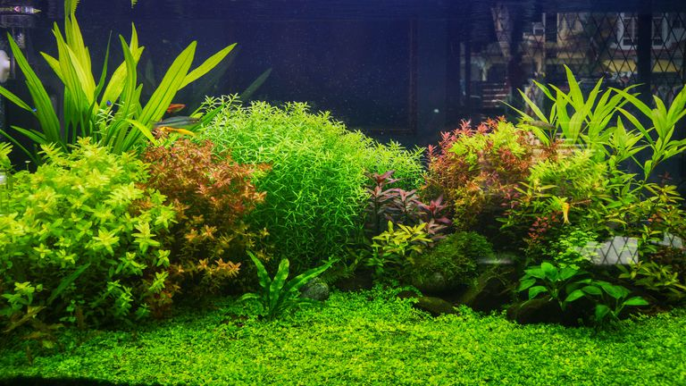 Landscape scenery in the fish tank