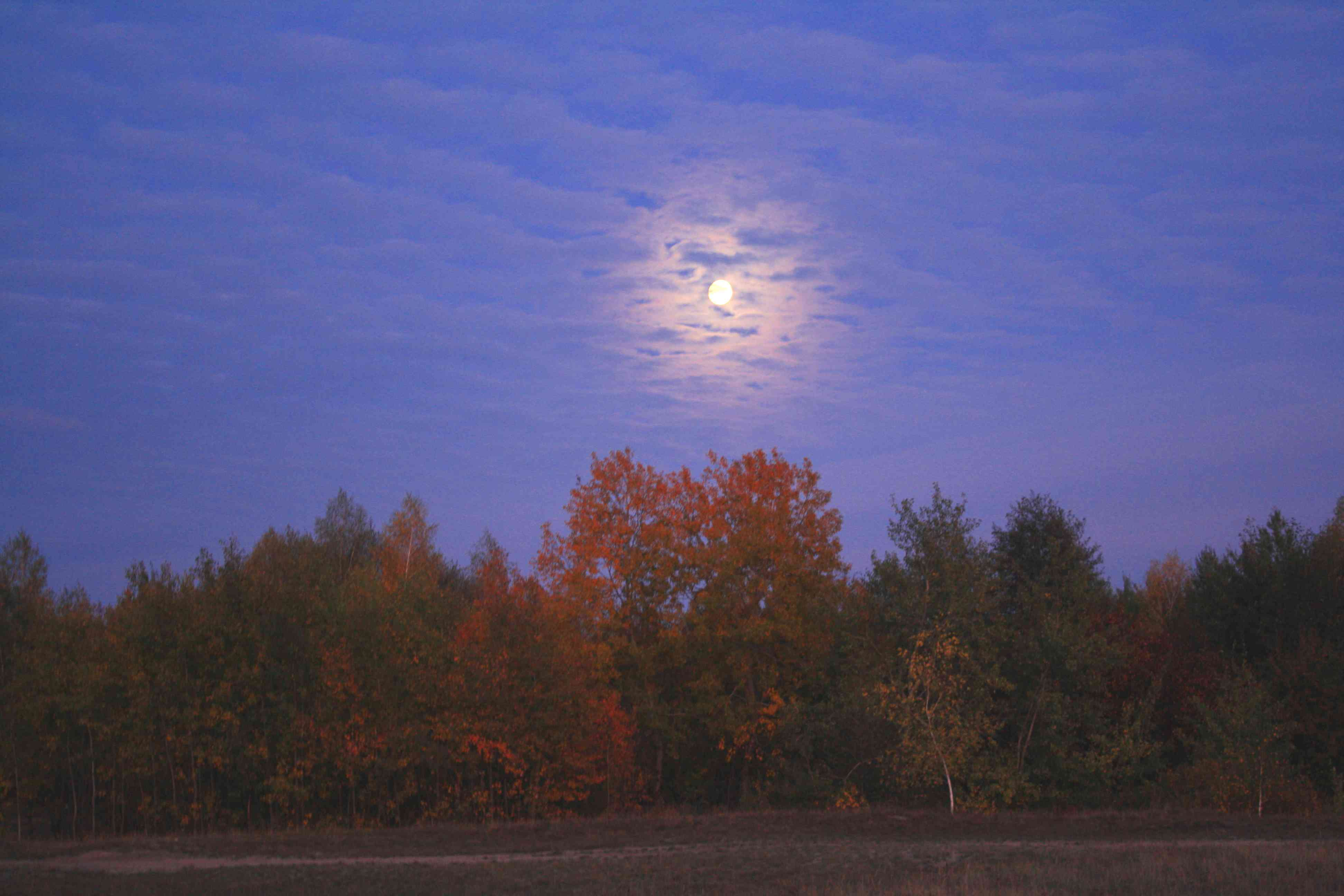 fall color in trees with moon glowing above