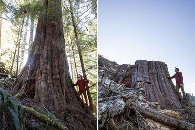 TJ Watt stands next to a tree
