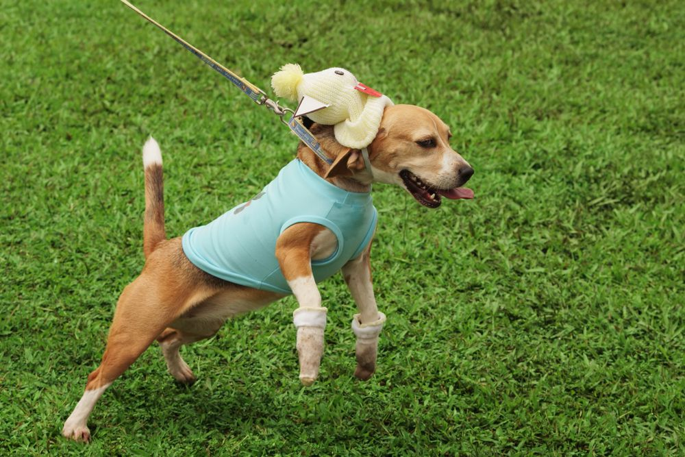A happy dog is a wonderful thing, but a dog always excited beyond control is a problem.