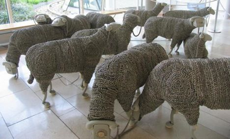 sheep phone photo