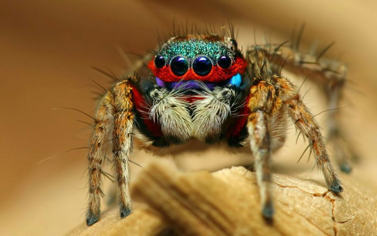A spider sitting on a piece of wood
