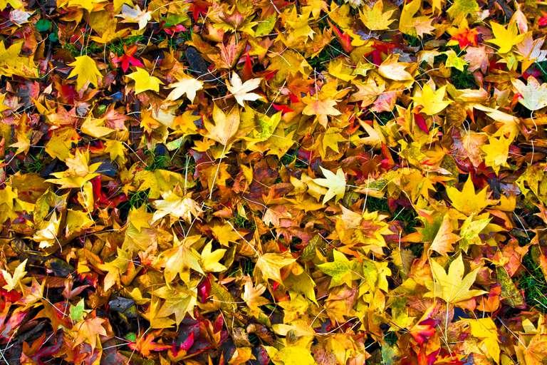 ¡No empaque las hojas! Haga un rico molde de hoja