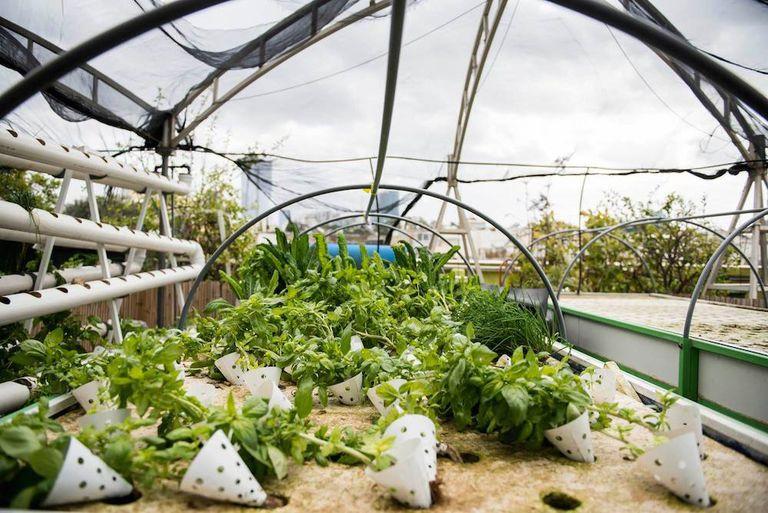 La granja en la azotea de Tel Aviv produce alimentos frescos para miles