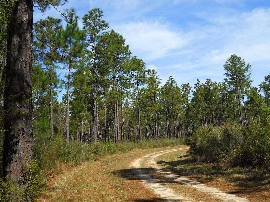 De Soto National Forest in Mississippi