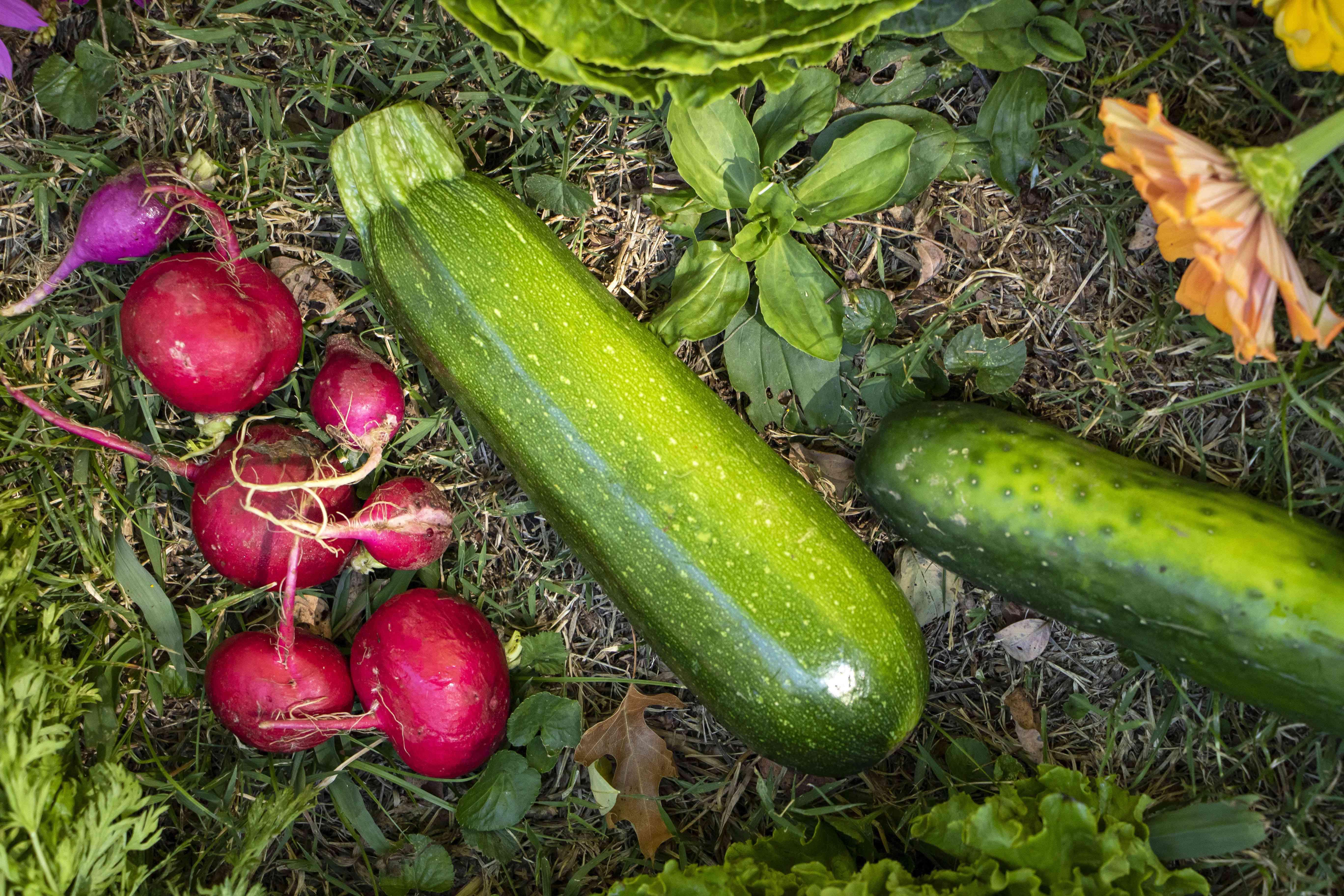 radishes and zucchinis on ground