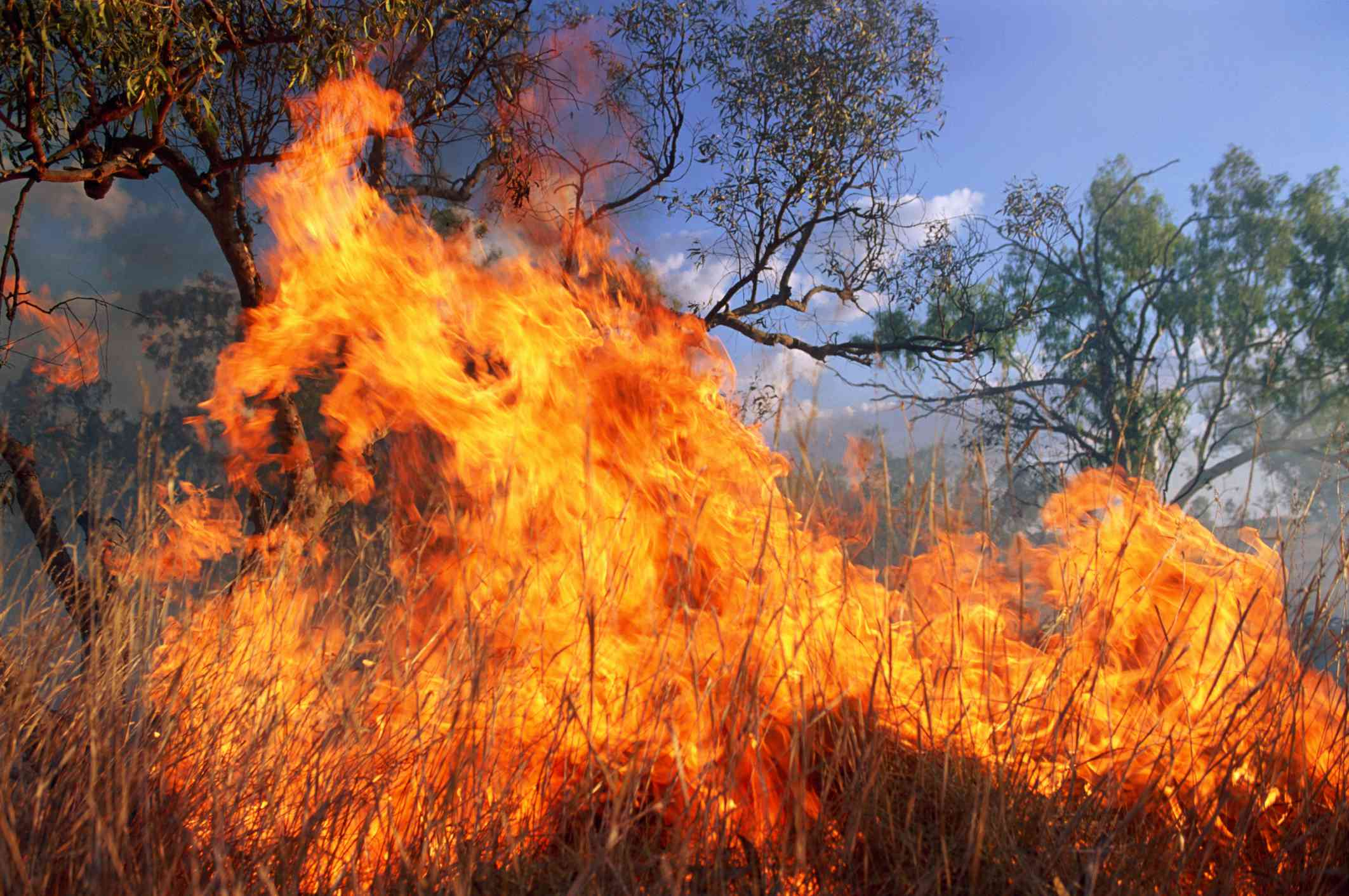 A close-up view of wind-blown wildfire flames