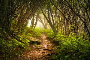 a path winds under arching trees