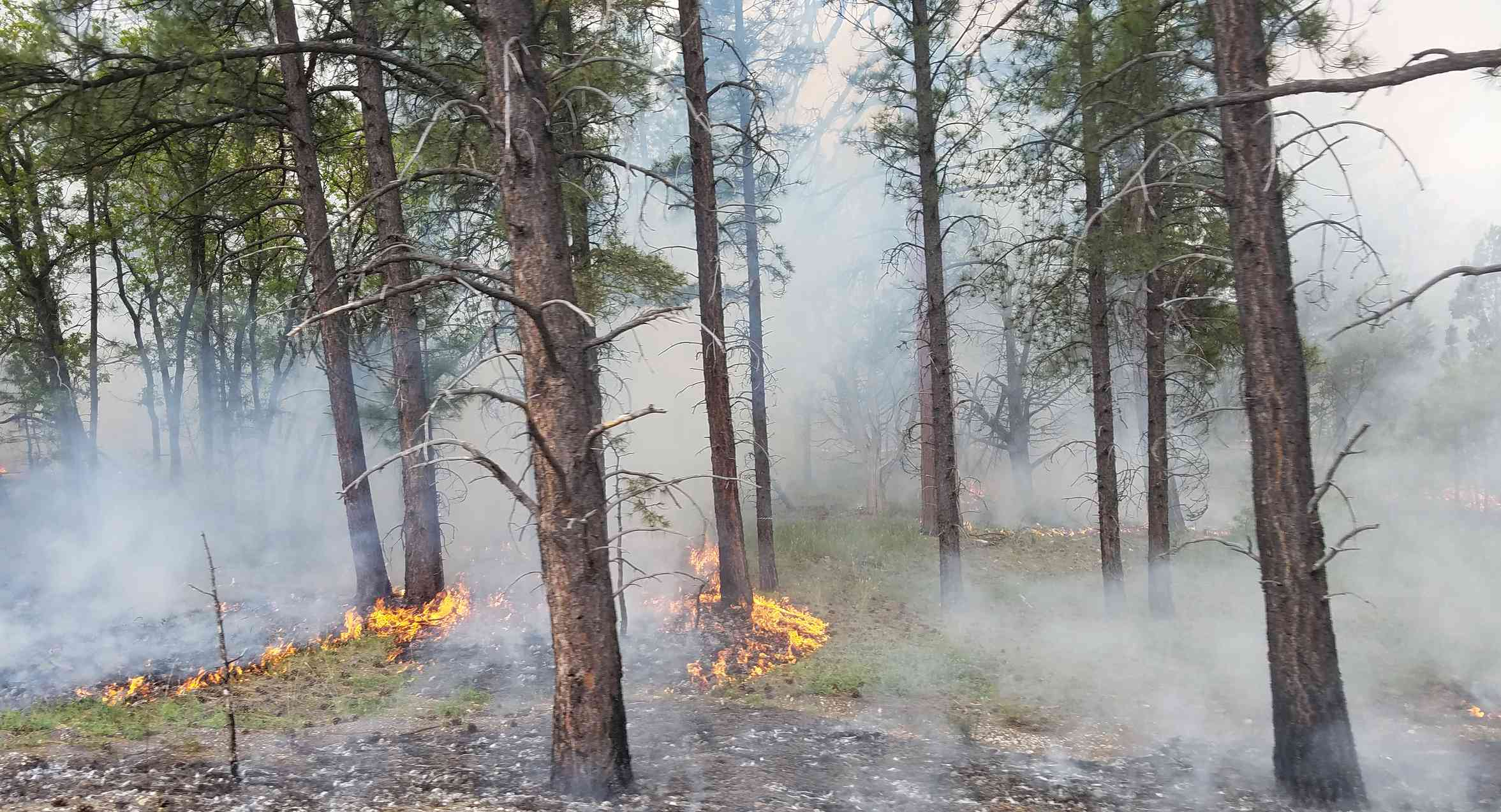 Park rangers perform controlled fires throughout the park