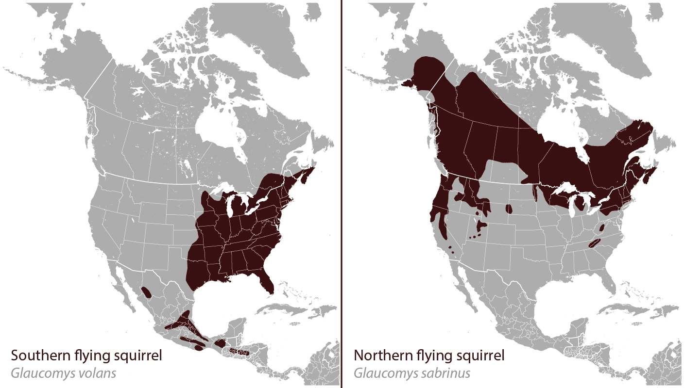 range of northern and southern flying squirrels