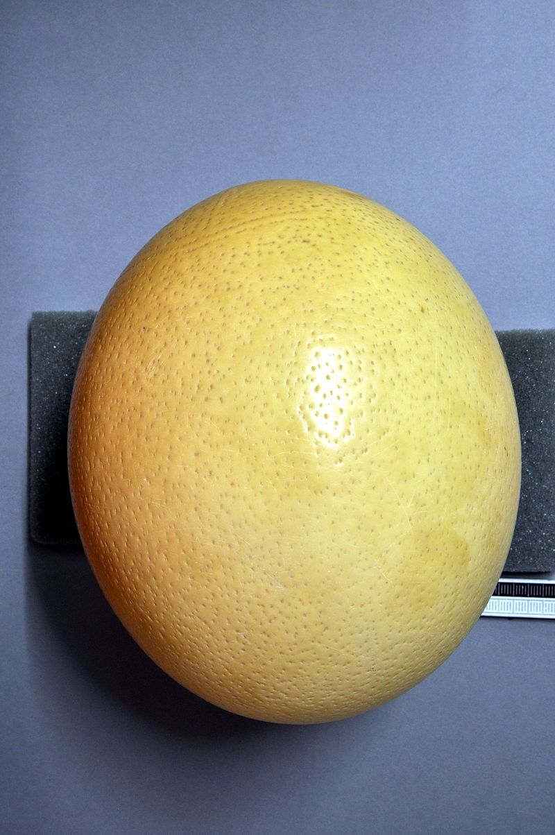 ostrich egg at museum