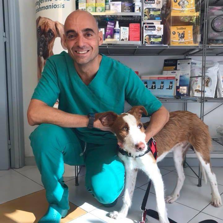 A veterinarian hugs a dog.