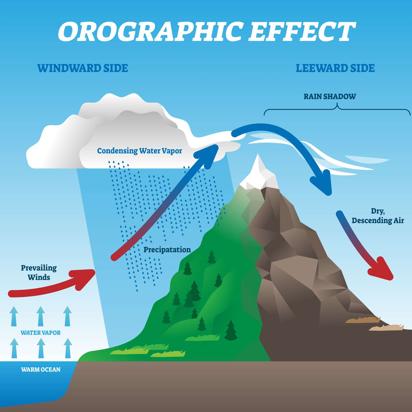 An infographic depicting how orographic lift can produce rain shadows.