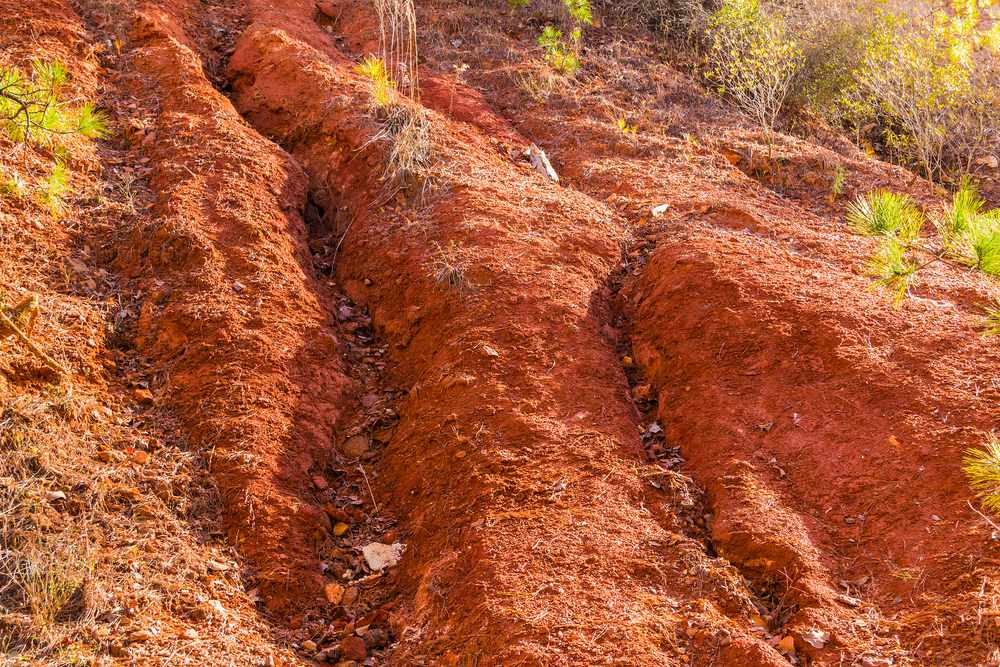 Georgia's famous red clay in places like Providence Canyon