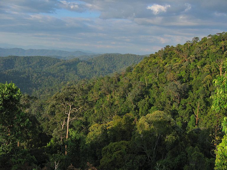 Forest of Taman Negara National Park