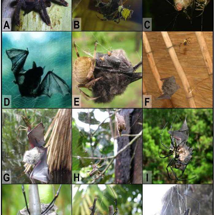 bat chart image