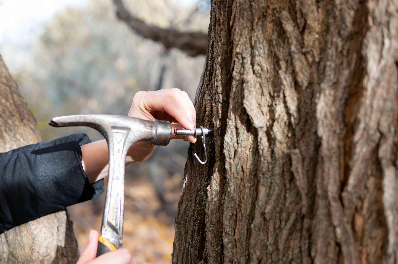 closeup hands hammer sugar tap into tree