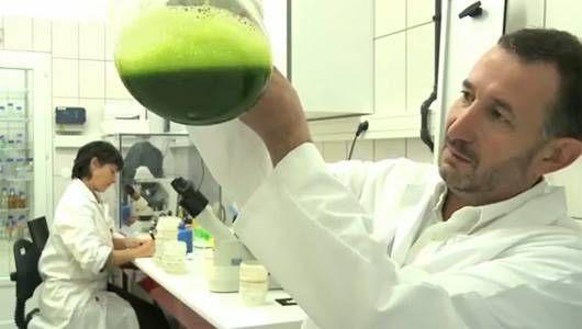 Pierre Calleja: Por qué las microalgas son el futuro de la energía verde