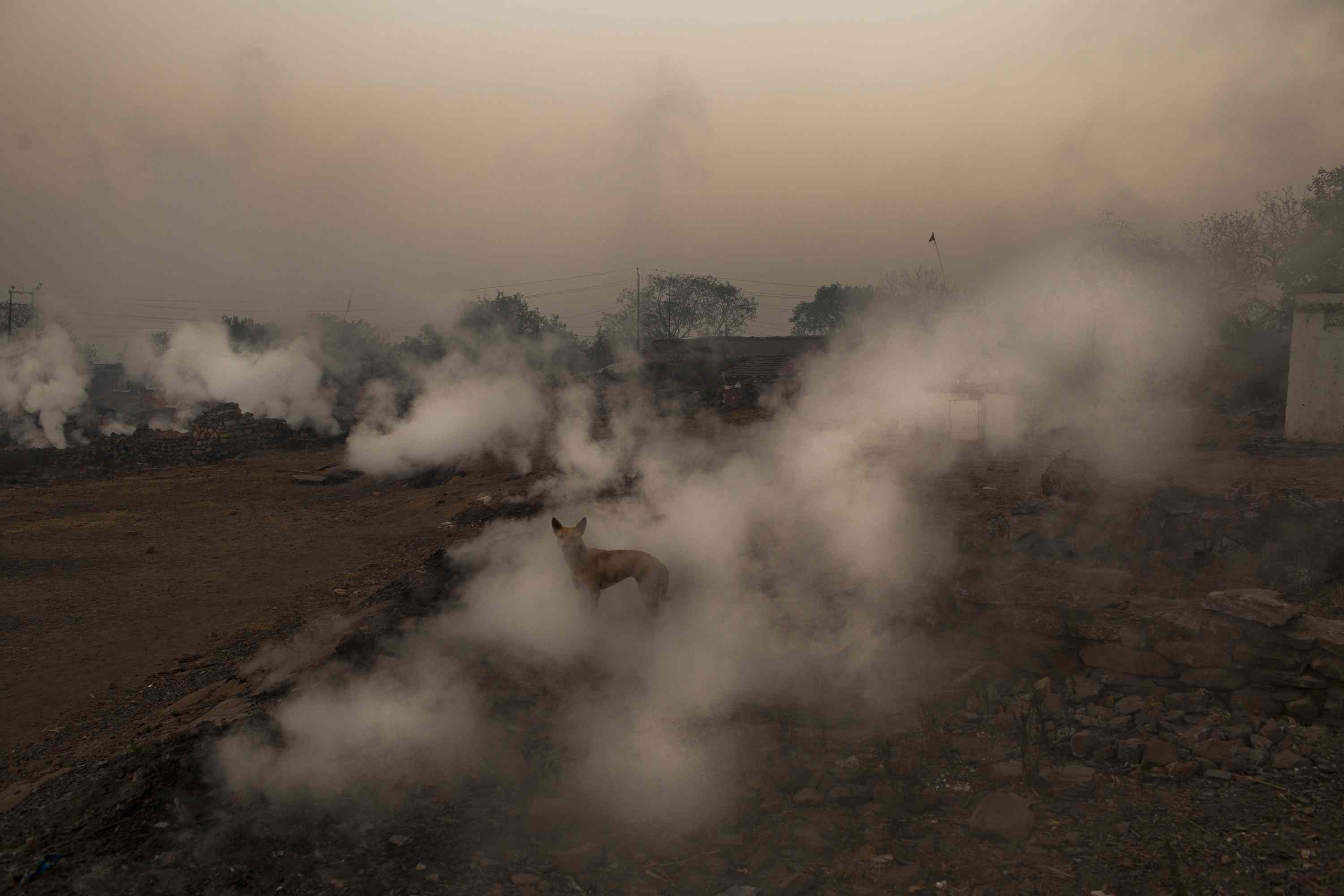 Dog amid noxious fumes from fissures in the ground, Jharia