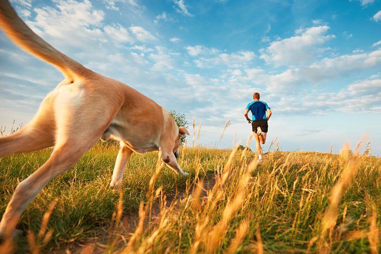 Dog follow a person on a jog through a meadow
