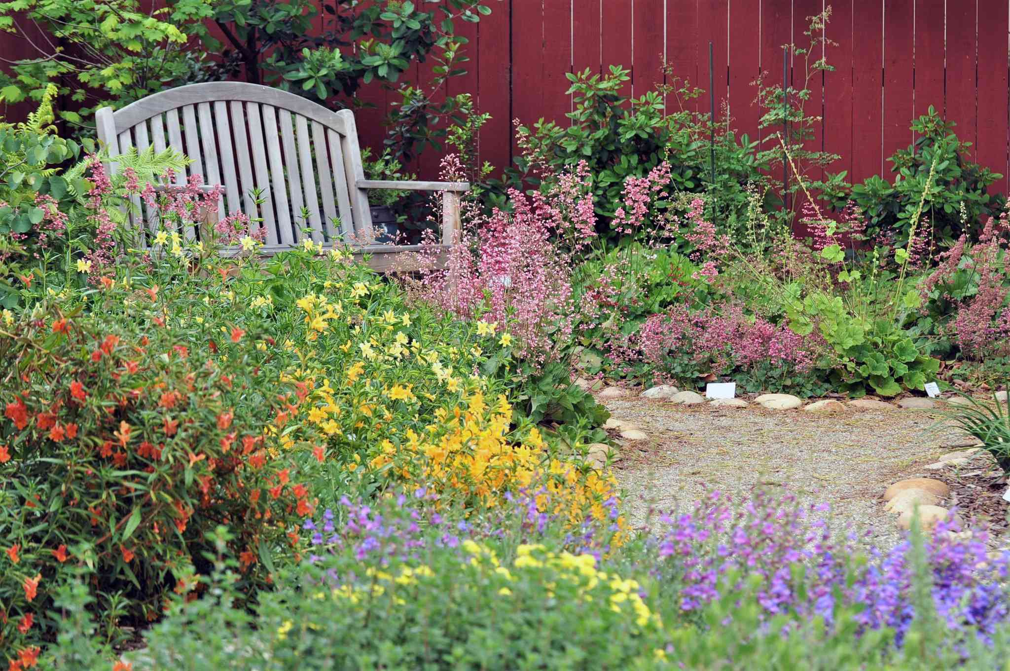 Native flowers in a garden with a bench