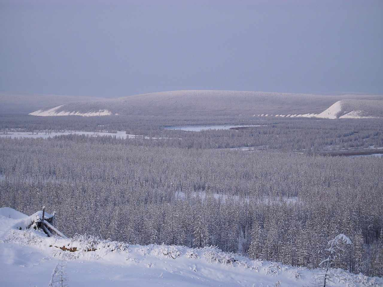 taiga in winter photo