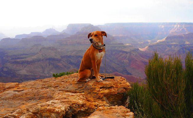 Guía del propietario de un perro para visitar parques nacionales