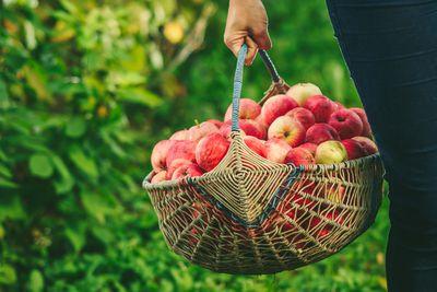 basket, apples, apple picking