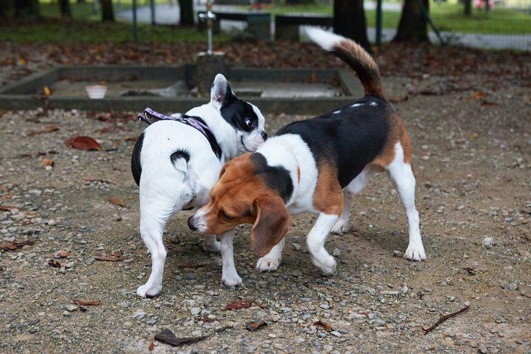 ¿Por qué los perros se huelen el trasero?