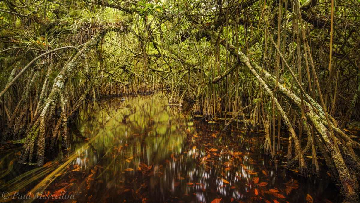 water path through mangrove overgrowth