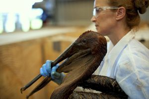 A woman in goggles holds a bird covered in oil.