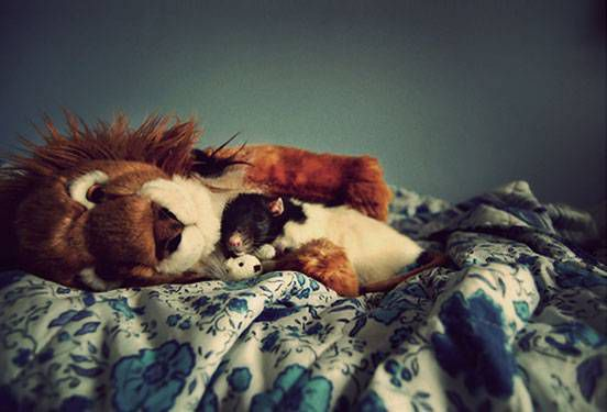 A rat on a bed cuddles with a giant stuffed lion